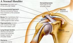 shoulder 1