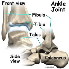 Anatomy of the Ankle Joint | Eddie Jackman