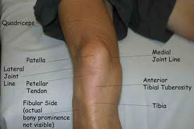 Meniscus – Anatomy and Biomechanics