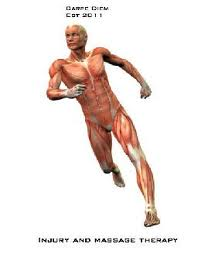 skeleton muscular movement